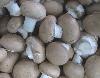 Pilze, Champignon
