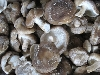 Pilze, Shiitake BIOLAND