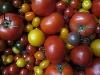 Tomate, Cherrytomate lose, rot BIOLAND KLII