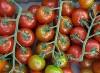 Tomate, Cherrystrauchtomate CAAE KLII