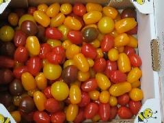 Tomate, Cherrystrauchtomate