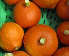 Hokkaidokürbis orange