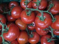 Tomate, Rispentomate KLII