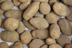 Kartoffeln Linda
