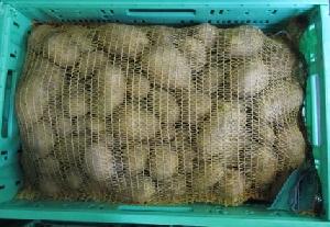 Kartoffel Bellinda fk BIOLAND
