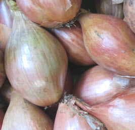 Zwiebel, Schalotte Frankreich