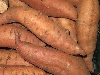 Batate Süßkartoffel