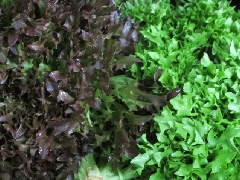 Salat, Crispy grün BIOLAND KLII