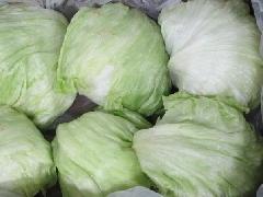 Salat, Eisbergsalat KLII