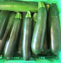Zucchini 14-21 BIOLAND