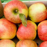 Apfel Braeburn, klein, BIOLAND KLII