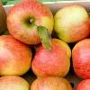 Apfel Braeburn, BIOLAND KLII