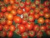 Tomate, Strauchtomate neue deutsche Ernte KLII