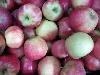 Apfel Elstar KLII