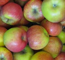 Apfel Topaz 60/80 KLII