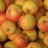 Apfel Festival KLII