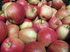 Apfel Gala frühe Ernte Italien KLII