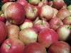 Apfel Gala KLII