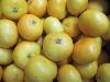 Clementine Tacle, gr. 3-4, kernlos KLII