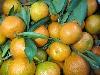 Clementine 1-3er Sorte Nules KLII