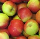 Apfel Santana 65+ KLII,