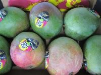 Mango Sorte Kent vorgereift