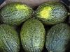 Melone Piel de Sapo CAAE