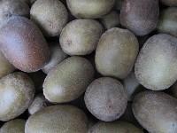 Kiwi gold KLII, groß, Sorte Soreli