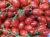 Tomate, Picadillystrauchtomate KLII