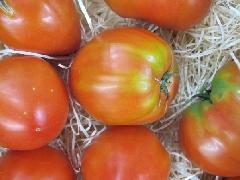 Tomate Ochsenherz Alte Sorte Fleischtomate
