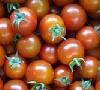 Raritäten Tomaten Mix KLII