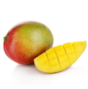 Mango Sorte Kent CAAE