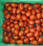 Tomate, Miniflaschentomate BIOLAND II
