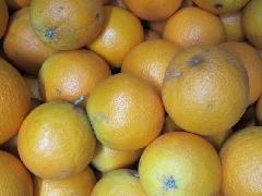 Orange, Saftorange 7-9er Größe