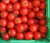 Tomate 'Baylee' Demeter KLII