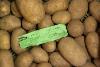 Kartoffeln Leyla festkochend